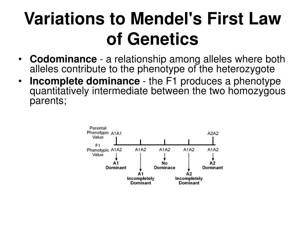 PPT - Basic genetics PowerPoint Presentation - ID:1188297