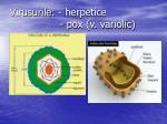 virusurile herpetice pox v variolic