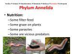porifera cnidaria platyhelminthes nematoda mollusca annelida arthropoda phylum annelida2