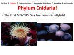 porifera cnidaria platyhelminthes nematoda mollusca annelida arthropoda phylum cnidaria