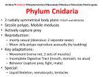 porifera cnidaria platyhelminthes nematoda mollusca annelida arthropoda phylum cnidaria6