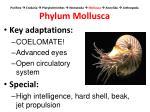 porifera cnidaria platyhelminthes nematoda mollusca annelida arthropoda phylum mollusca4