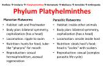 porifera cnidaria platyhelminthes nematoda mollusca annelida arthropoda phylum platyhelminthes4