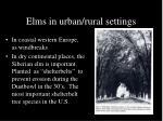 elms in urban rural settings