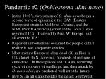 pandemic 2 ophiostoma ulmi novo