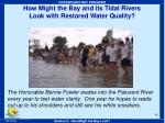 how might the bay and its tidal rivers look with restored water quality