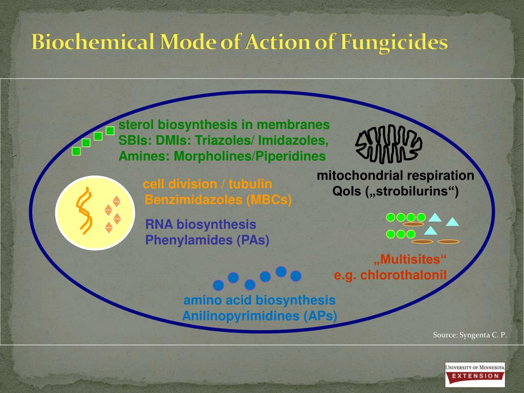 PPT - Fungicides 101: Basics and Use in Minnesota PowerPoint