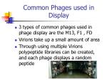 common phages used in display