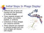 initial steps in phage display