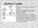 maxillary cuspids