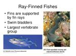ray finned fishes