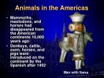 animals in the americas