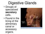 digestive glands