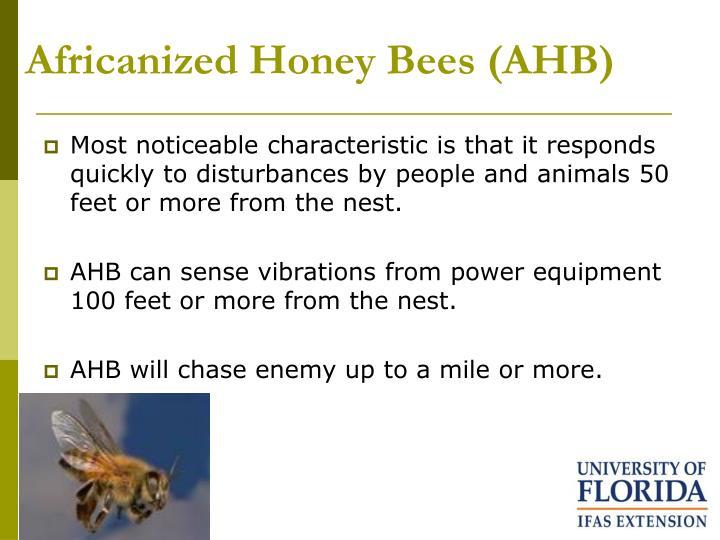 Africanized Honey Bees (AHB)
