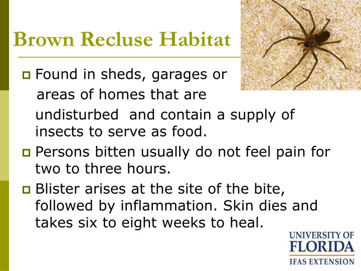 Brown Recluse Habitat