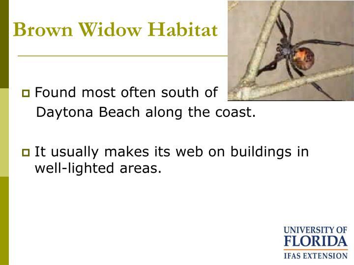 Brown Widow Habitat
