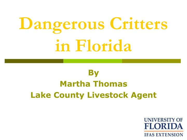 dangerous critters in florida n.