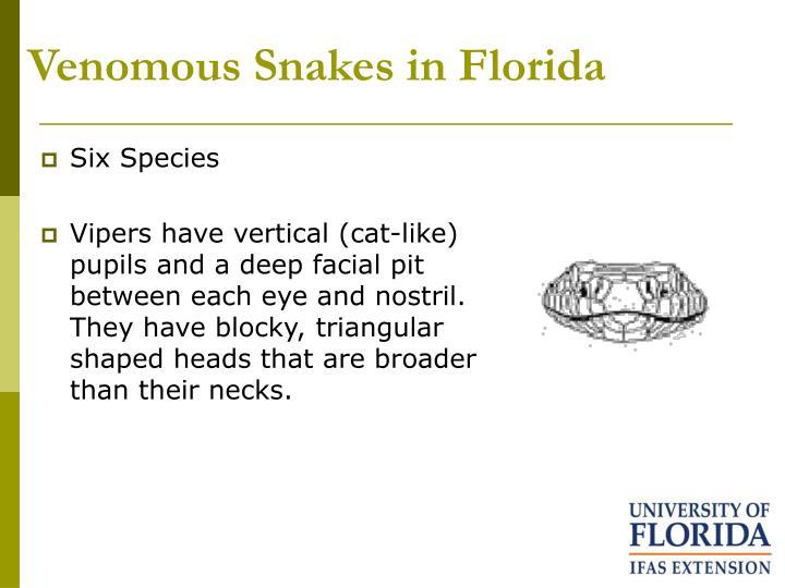 Venomous Snakes in Florida