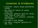 cutworms rindworms