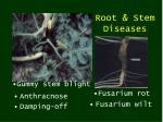 root stem diseases