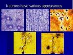 neurons have various appearances