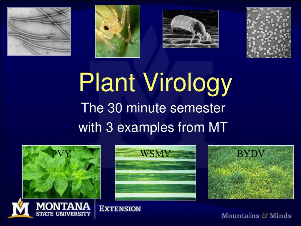 plant virology n.