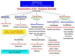 classification of the kingdom animalia