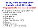 the key to the success of the animals is their diversity
