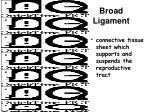 broad ligament