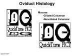 oviduct histology