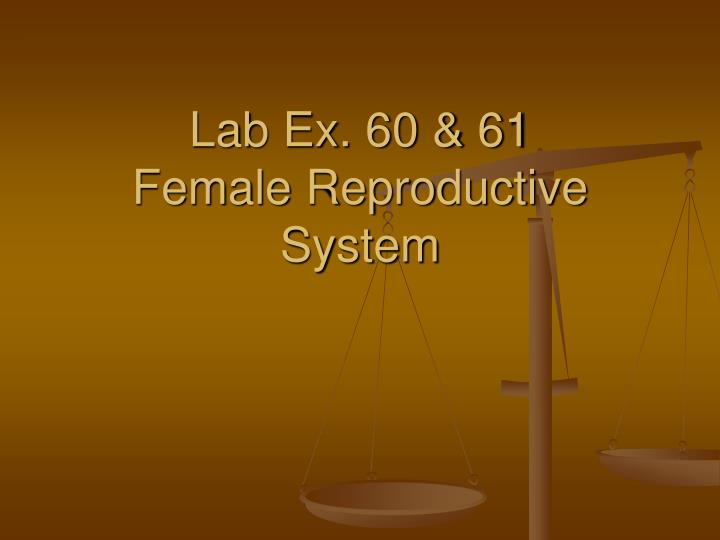 lab ex 60 61 female reproductive system n.