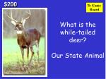 what is the while tailed deer our state animal