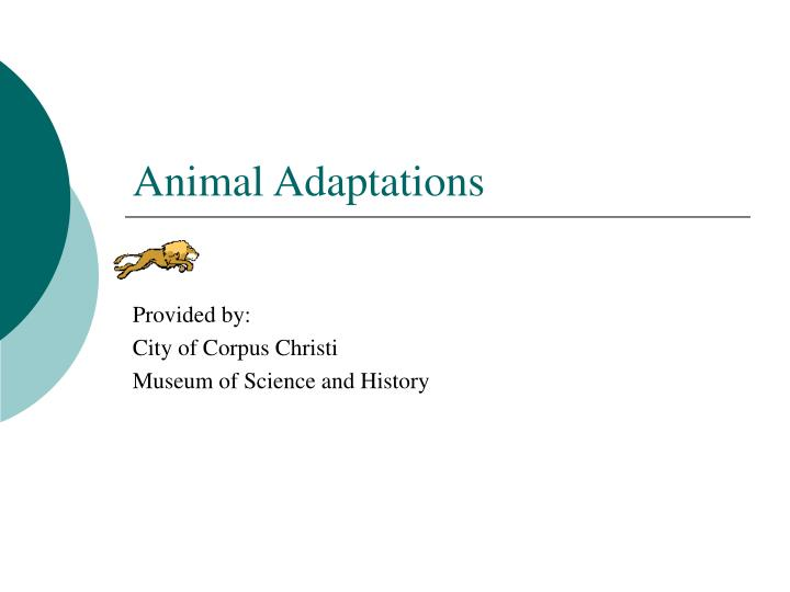 animal adaptations n.