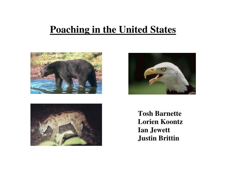 poaching in the united states n.
