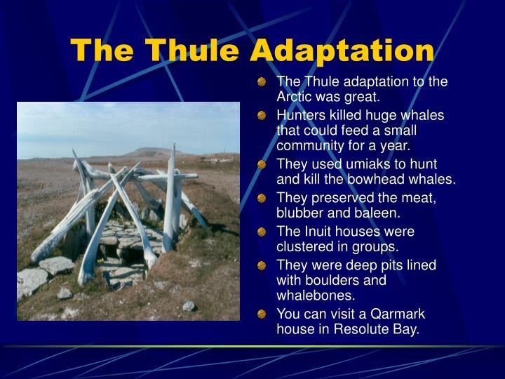 The thule adaptation