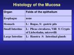 histology of the mucosa1