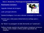 aula 2 anatomia e fisiologia do aparelho digestivo10