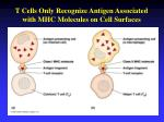 t cells only recognize antigen associated with mhc molecules on cell surfaces