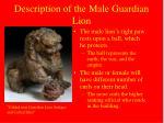 description of the male guardian lion
