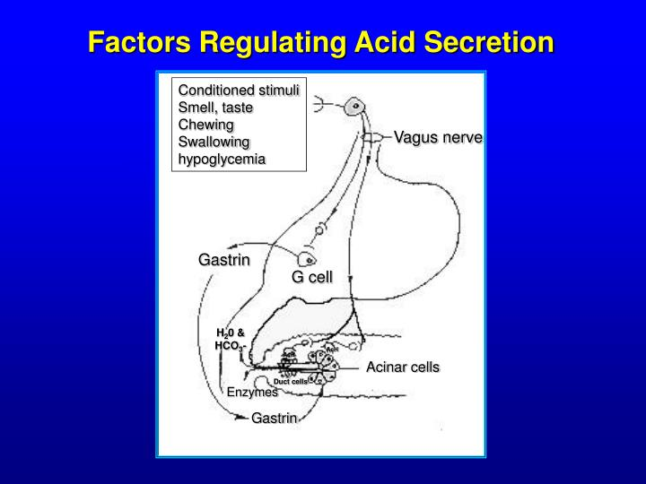 Factors Regulating Acid Secretion