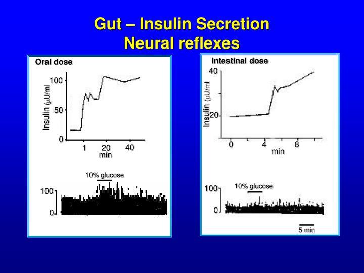 Gut – Insulin Secretion