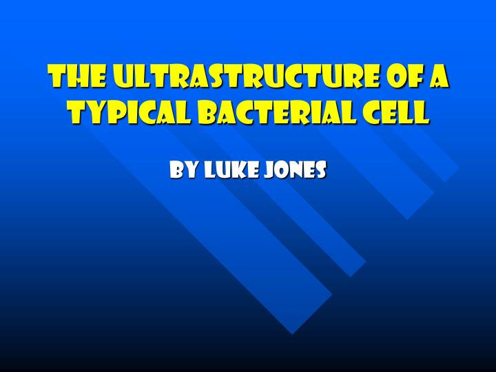 the ultrastructure of a typical bacterial cell n.