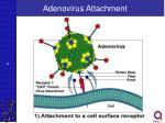 adenovirus attachment
