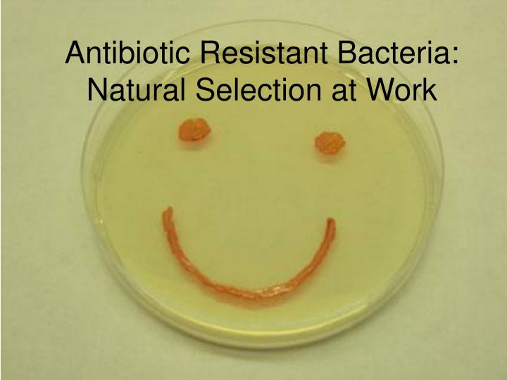 Natural Selection Antibiotic Resistant Bacteria