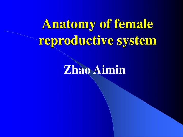 anatomy of female reproductive system n.