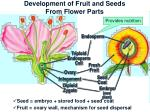 development of fruit and seeds from flower parts