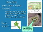 plant body1