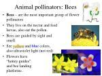 animal pollinators bees