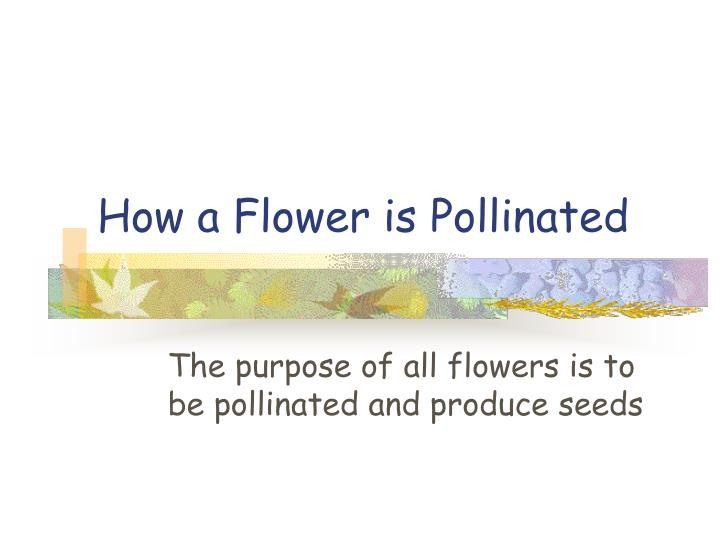 how a flower is pollinated n.