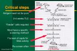 critical steps